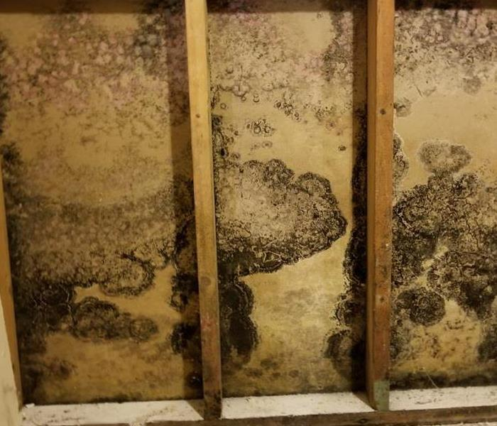 Mold Remediation What To Do When Mold Keeps Coming Back
