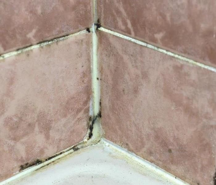 Mold Remediation Tips for Preventing Bathroom Mold